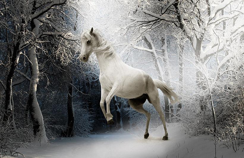 konj_gozd